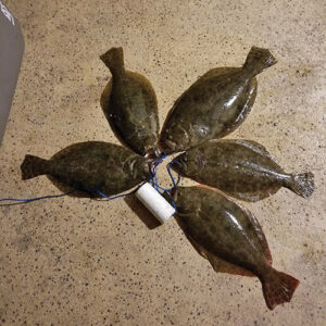 texas flounder fishing 300x300 Flounder Tips and Tactics